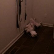 Puppy caught sleeping in hilariously odd fashion