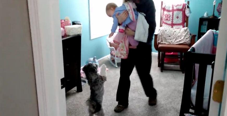 Baby hilariously amused at jumping puppy