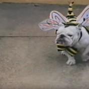 Animals in Adorable Halloween Costumes