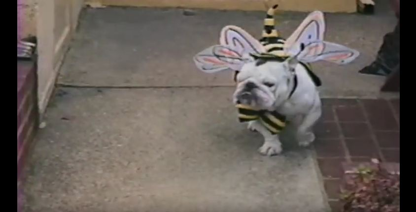 Animals in Adorable Halloween Costumes