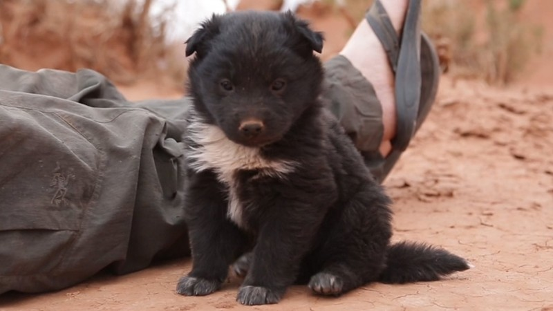 Adventurers Save Puppy Stranded In The Desert, Takes Him On Epic Road Trip!