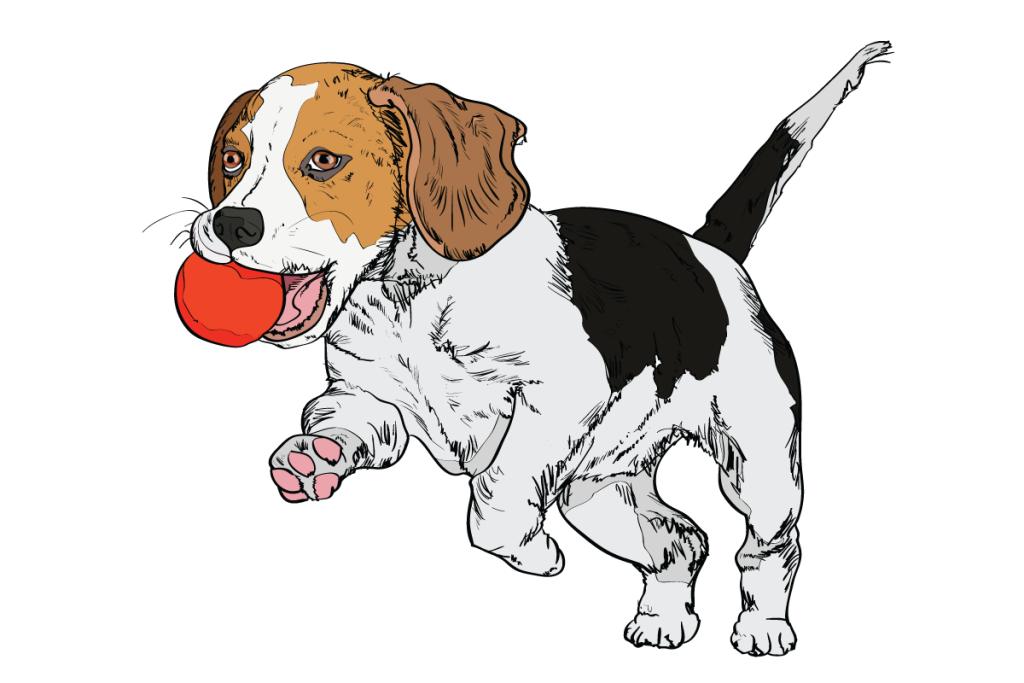 01-Dog-Body-Language