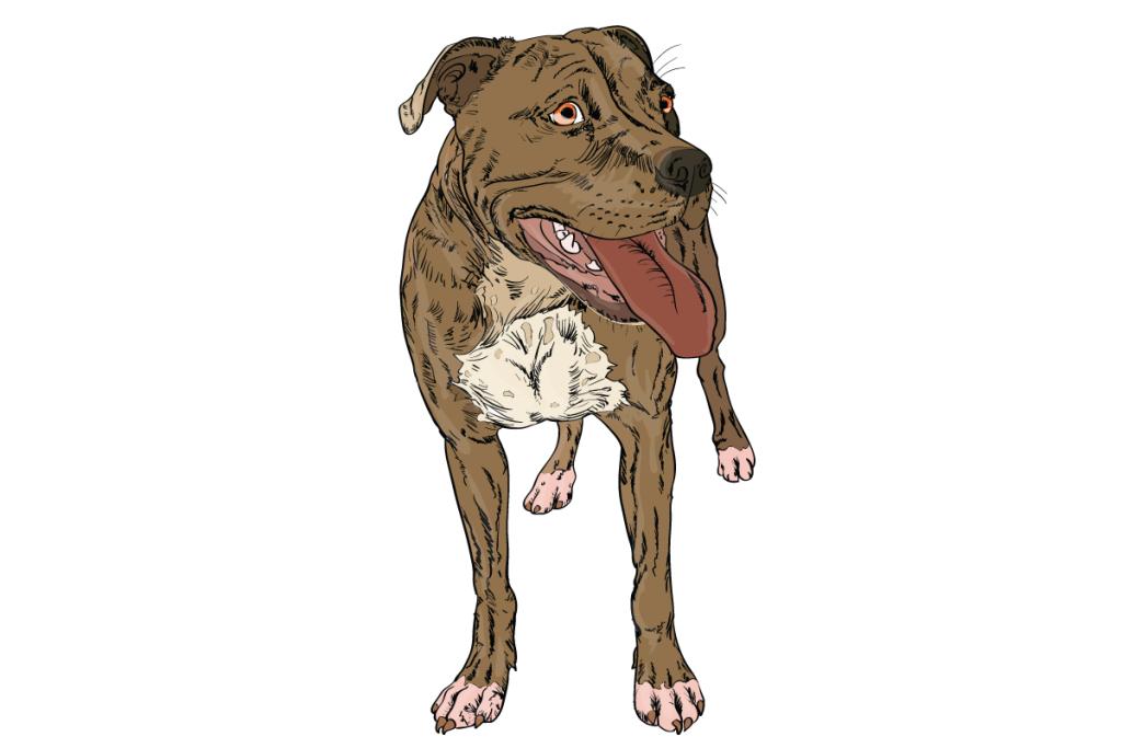 03-Dog-Body-Language