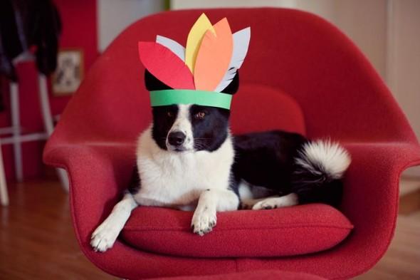 03-Thanksgiving-Dog