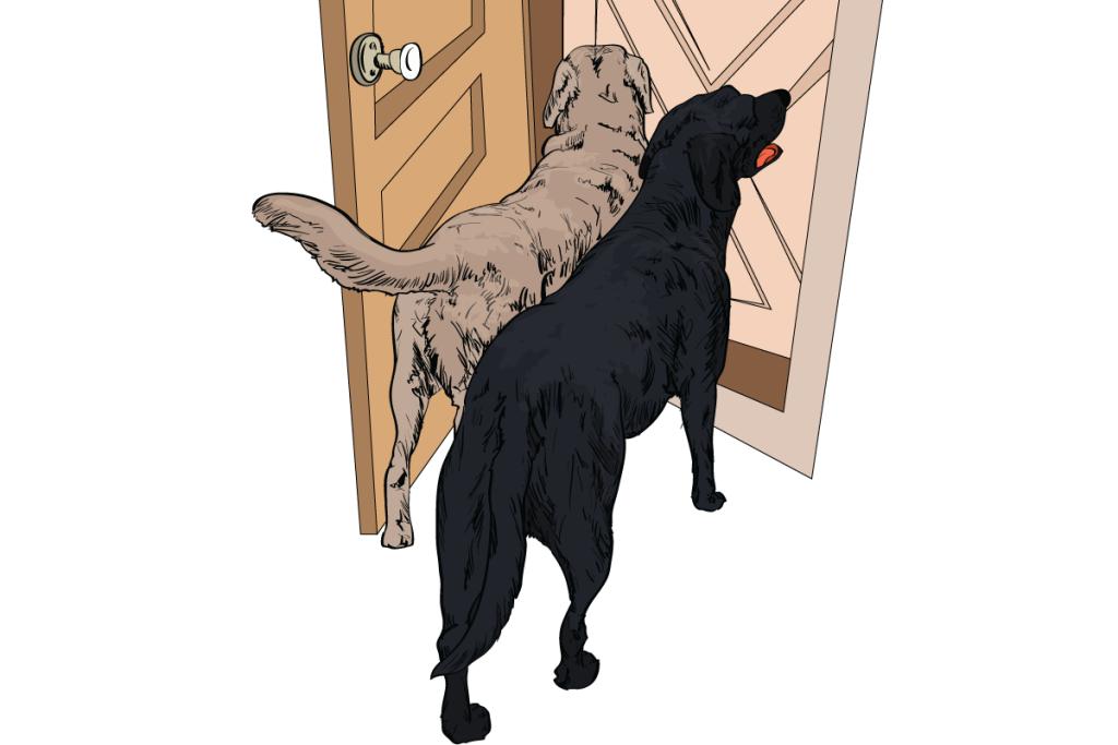 04-Dog-Body-Language