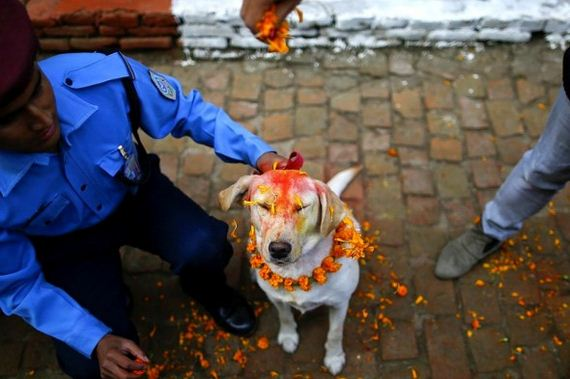 04-Kukur-Tihar-Festival-in-Nepa