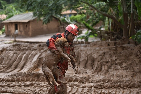 A fireman rescues in Paracatu de Baixo, Minas Gerais, Brazil on November 9, 2015 a dog that was trapped in the mud that swept through the Village of Bento Rodrigues on Thursday killing at least one person and leaving other 26 missing. The tragedy occurred Thursday when waste reservoirs at the partly Australian-owned Samarco iron ore mine burst open, unleashing a sea of muck that flattened the nearby village of Bento Rodrigues. AFP PHOTO / Douglas MAGNO (Photo credit should read Douglas Magno/AFP/Getty Images)