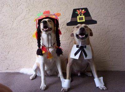04-Thanksgiving-Dog