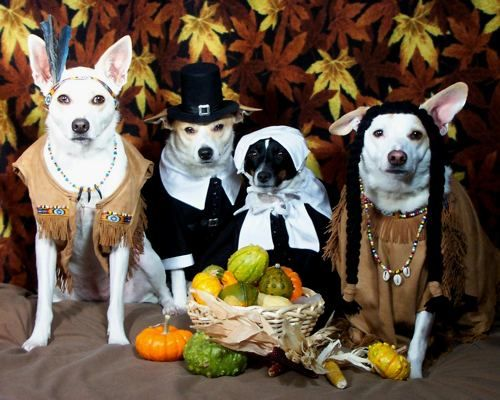 05-Thanksgiving-Dog