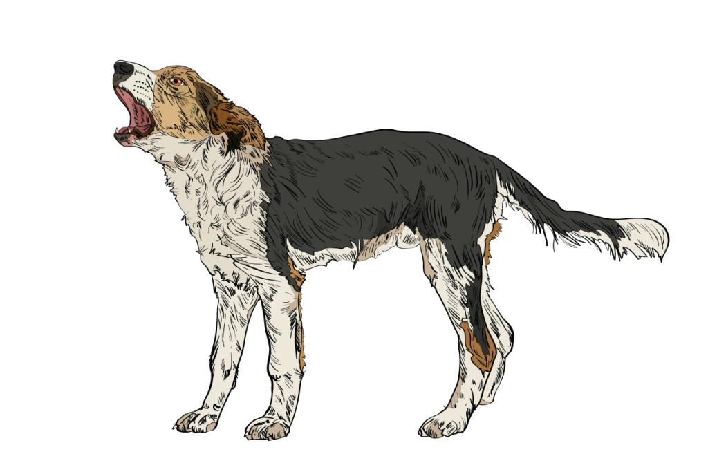 06-Dog-Body-Language