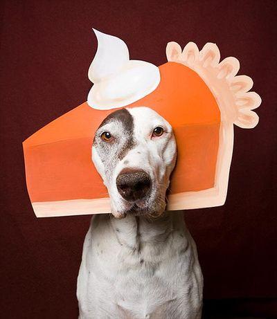 06-Thanksgiving-Dog