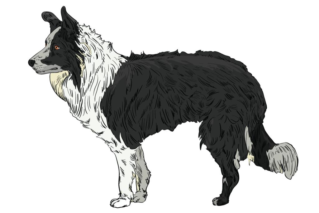 07-Dog-Body-Language