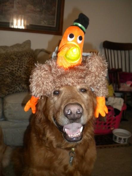 08-Thanksgiving-Dog