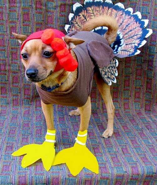 09-Thanksgiving-Dog
