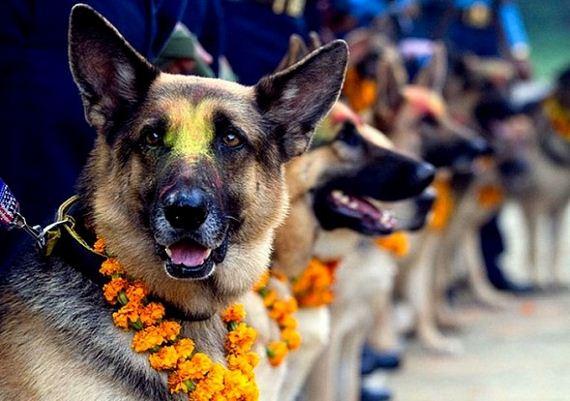 10-Kukur-Tihar-Festival-in-Nepa