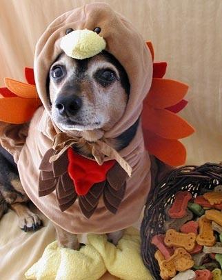10-Thanksgiving-Dog