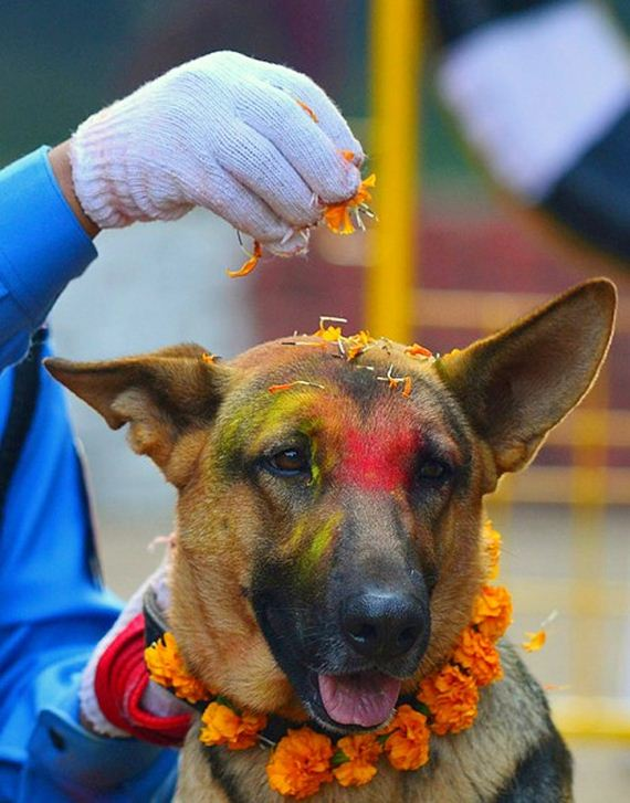 11-Kukur-Tihar-Festival-in-Nepa