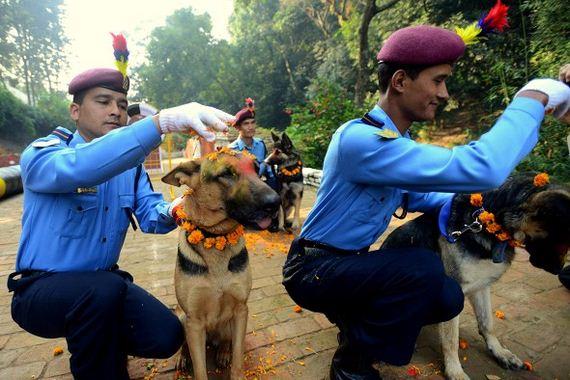 12-Kukur-Tihar-Festival-in-Nepa