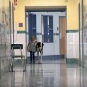 When I Saw How This Dog Helps A Little Girl Get Around Her School, I Teared Up