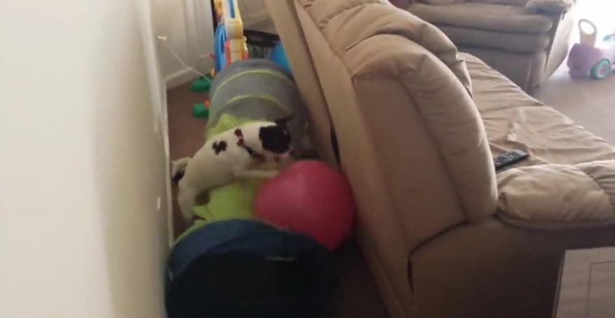 Dog attacks ball
