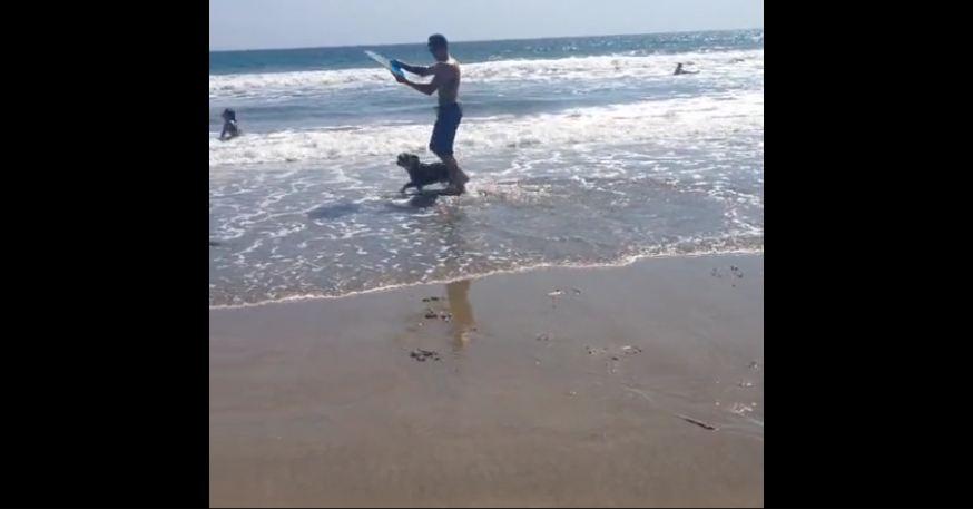 Wakeboarding Bulldog demonstrates impressive skills