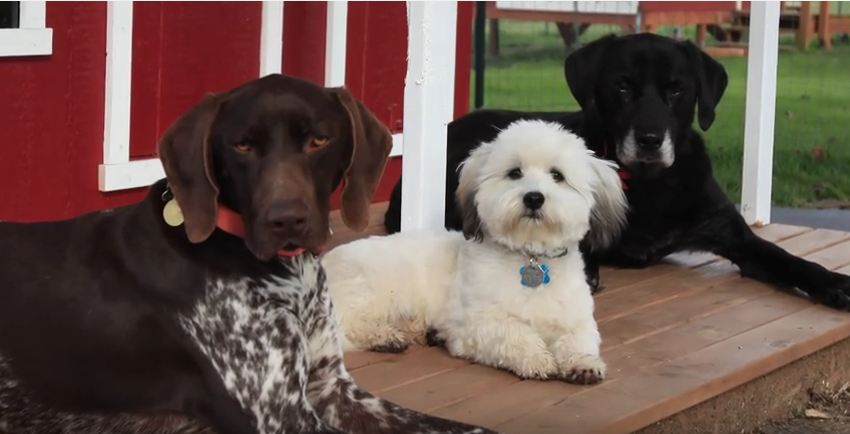 Their Dogs Needed A Warm House For Winter, So This Family Put Something Epic Together