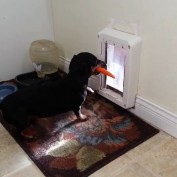 Dog Simply Cannot Figure Out Why This In't Working!