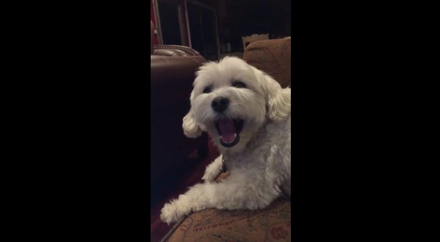 Irritated dog makes priceless facial expressions