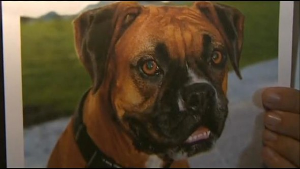 Man Prays for Lost Dog's Return and Prayer is Answered