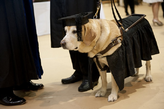 Service Dog Gets Honorary Master's Degree & Attends Graduation With His Human!