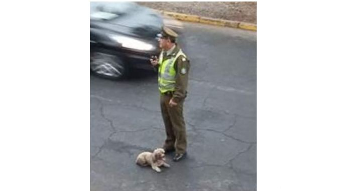 Police Stops Runaway Driver that Hit and Left Injured Dog