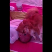 Dog loves to cuddle with newborn baby