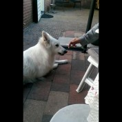 Clever dog disapproves cigarette