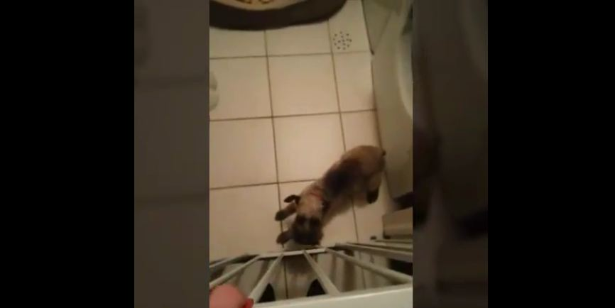 Puppy gives emotional reaction to owner's return home