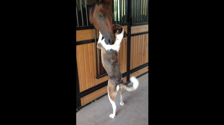 Horse and dog have an unlikely friendship