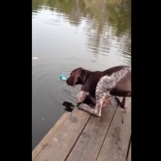 Dog Drinks Lake Water to Fetch Ball!