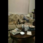 Sneaky cat attacks sleeping dog