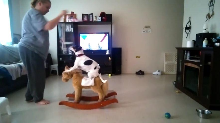 Dog balances on a rocking horse