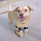 Dog Abandoned due to Disability Gets Second Chance