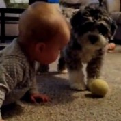 Puppy plays fetch with baby
