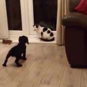 Puppy Meets Cat For First Time!