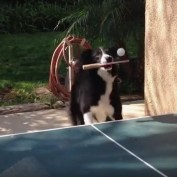 This Dog Can Play Ping Pong Better Than A Human!