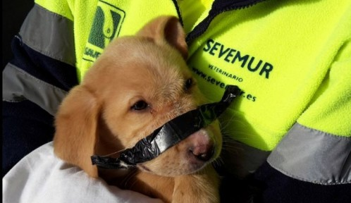 Neighbors Help Save Garbage Puppy with Tapped Snout