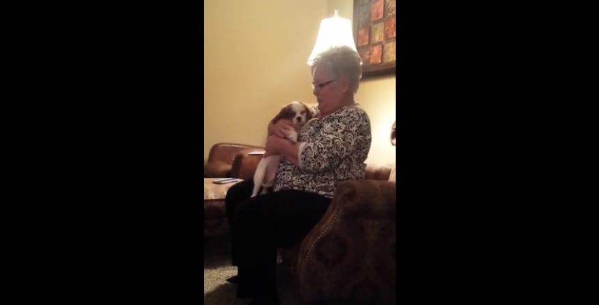 Grandma's priceless reaction to Christmas puppy