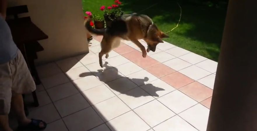 Dog's priceless reaction after discovering shadow