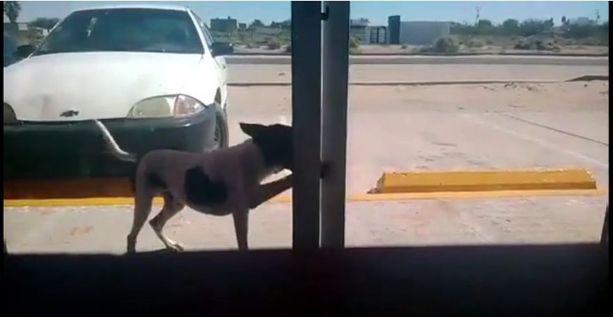 Stray dog checks himself into animal clinic