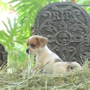 """Puppies Make Adorable Debut in """"Horror"""" Clip"""