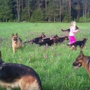 This Little Girl Has A Blast Hanging Out With Her Besties…14 German Shepherds