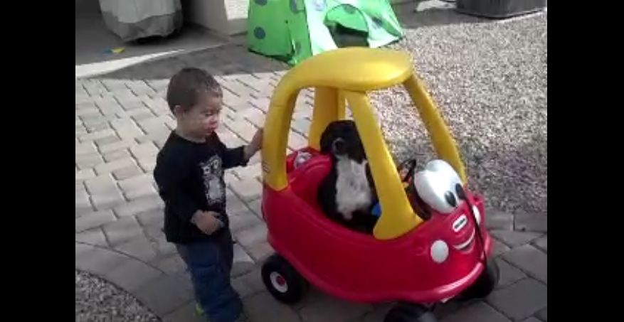 Baby gives his dog a ride