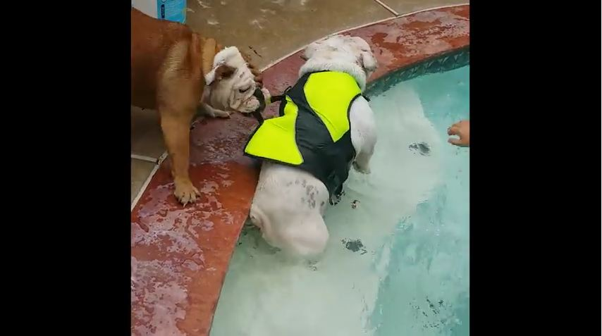 Dog Tries to Rescue His Buddy Who Is NOT Drowning